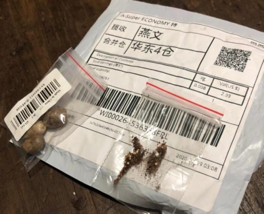 Ministério encontra fungos e bactérias em pacotes de sementes não solicitadas