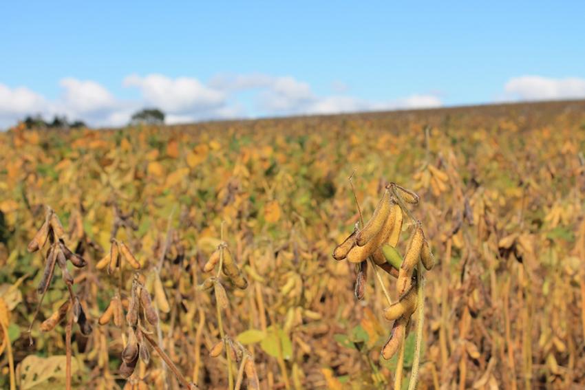 Governo zera imposto de importação da soja e do milho