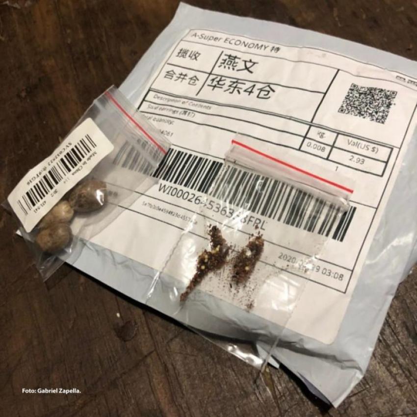 "Cidasc emite alerta sobre sementes enviadas de ""brinde"" a agricultores"