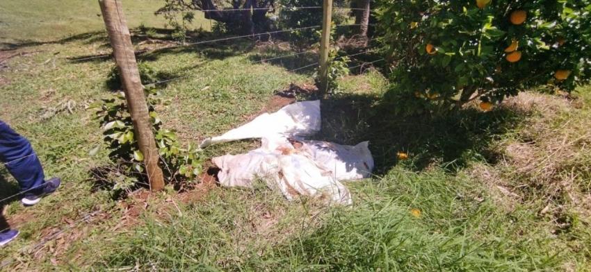 Furto de gado é registrado no interior de Galvão