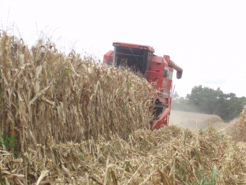 Exportação de milho do Brasil sobe 44% na primeira semana de dezembro