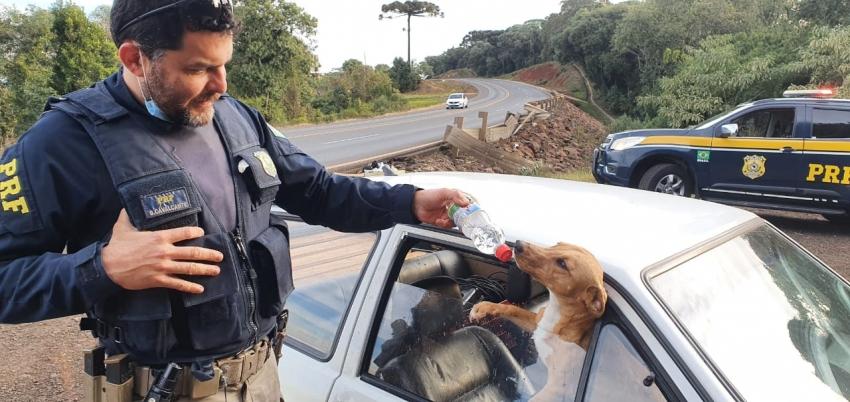 Cães deixados em veículo acidentado recebem cuidados da PRF