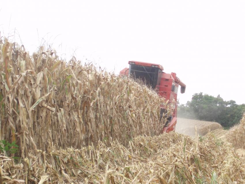 Estado busca apoio do Ministério da Agricultura para aumentar disponibilidade de milho em SC