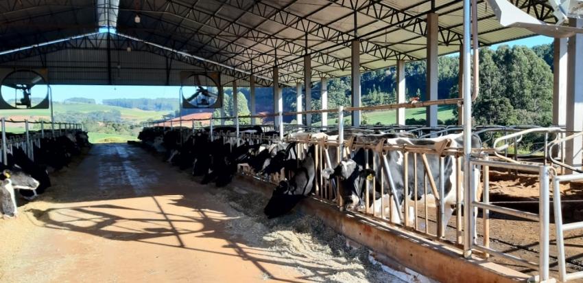 """Produtores participam de curso de """"casqueamento"""" no interior de Galvão"""