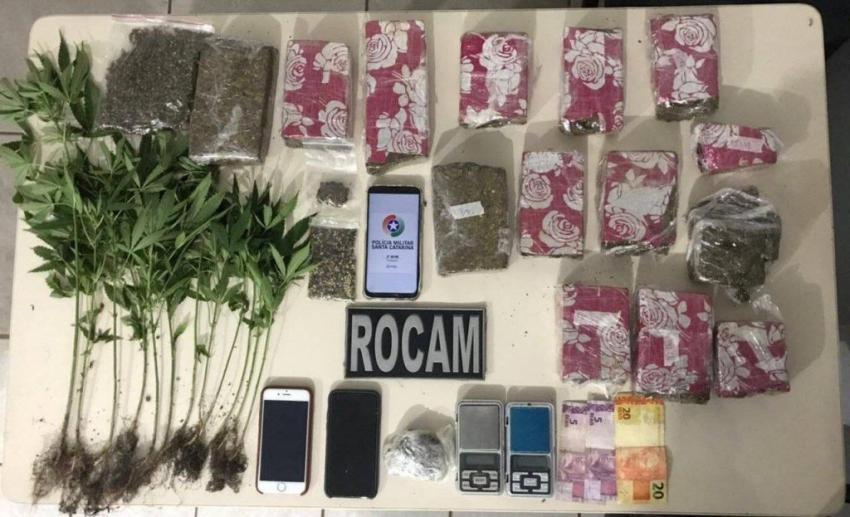 Pés de maconha são apreendidos e casal é preso suspeito de tráfico de drogas em Chapecó