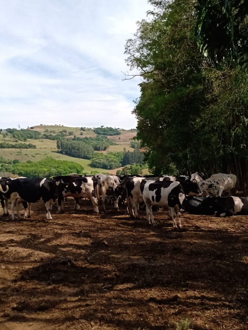 Estados do Sul se unem para discutir redução de custos na produção de leite