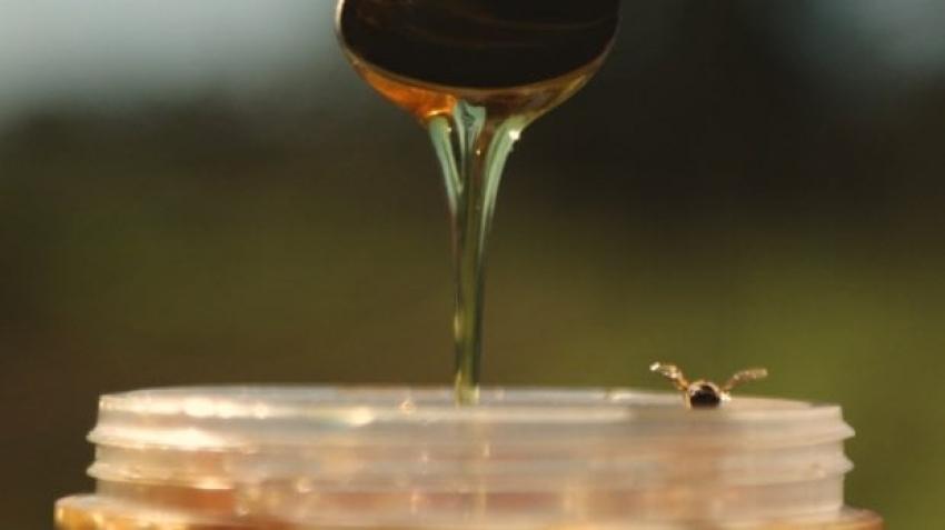 Produtor do melhor mel do mundo, Santa Catarina prevê safra acima da média em 2020